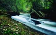 大自然纯朴之美 翠绿森林的溪流壁纸图片壁纸 大自然纯朴之美 风景壁纸