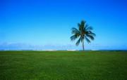 大自然纯朴之美 草原海岸上椰子树壁纸图片壁纸 大自然纯朴之美 风景壁纸