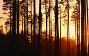 大自然纯朴之美 暮色森林 日落映照的树林壁纸图片壁纸 大自然纯朴之美 风景壁纸