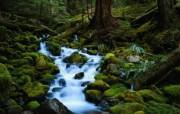 大自然纯朴之美 森林的小溪流水壁纸图片壁纸 大自然纯朴之美 风景壁纸