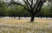 大自然纯朴之美 一片白色的蒲公英壁纸图片壁纸 大自然纯朴之美 风景壁纸