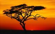 大自然纯朴之美 非洲草原上的红色日落壁纸图片壁纸 大自然纯朴之美 风景壁纸