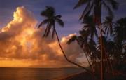 大自然纯朴之美 暮色映照的椰林海岸壁纸图片壁纸 大自然纯朴之美 风景壁纸