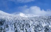 冬天雪景白雪森林 风景壁纸