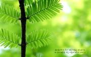 韩国版圣经壁纸 自然风景篇 风景壁纸