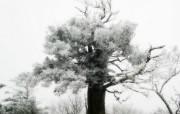 韩国专题摄影冬天的颜色树木篇 风景壁纸