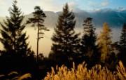 宽屏树林风景桌面壁纸 风景壁纸