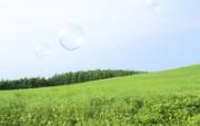 绿色草地风景宽屏壁纸 绿色草地风景宽屏壁纸 风景壁纸