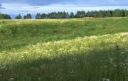 绿色青葱世界壁纸 风景壁纸