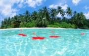 马尔代夫的水和天壁纸 风景壁纸