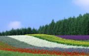 美丽田园风景摄影 风景壁纸