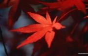 浓浓秋色秋天树叶摄影 风景壁纸