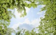 晴朗天空 草原树木 风景壁纸