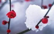 清凉冬日雪景宽屏壁纸 风景壁纸
