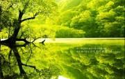 清新春日绿景壁纸 清新春日绿景壁纸 风景壁纸