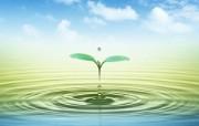 清新夏日 水 空 绿叶壁纸 晴空绿叶PS合成图片 1920 1200 清新夏日水 空 绿叶壁纸 风景壁纸