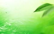 清新夏日 水 空 绿叶壁纸 梦幻夏日图片 绿叶水珠图片 1920 1200 清新夏日水 空 绿叶壁纸 风景壁纸