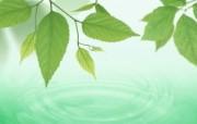 清新夏日 水 空 绿叶壁纸 清新夏日 朦胧绿叶图片 1920 1200 清新夏日水 空 绿叶壁纸 风景壁纸