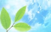 清新夏日 水 空 绿叶壁纸 梦幻夏日图片 晴空下的绿叶图片 1920 1200 清新夏日水 空 绿叶壁纸 风景壁纸