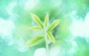 清新夏日 水 空 绿叶壁纸 梦幻夏日图片 阳光绿叶图片 1920 1200 清新夏日水 空 绿叶壁纸 风景壁纸