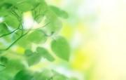 清新夏日 水 空 绿叶壁纸 梦幻夏日图片 阳光下的绿叶图片 1920 1200 清新夏日水 空 绿叶壁纸 风景壁纸