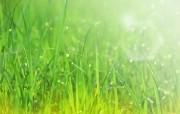 清新夏日 水 空 绿叶壁纸 梦幻夏日图片 阳光青草图片 1920 1200 清新夏日水 空 绿叶壁纸 风景壁纸