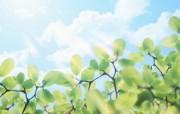 清新夏日 水 空 绿叶壁纸 梦幻夏日图片 晴空绿叶图片 1920 1200 清新夏日水 空 绿叶壁纸 风景壁纸