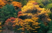 秋色无限森林里的秋天壁纸 风景壁纸