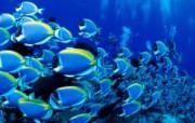 热带海底世界高清壁纸 风景壁纸