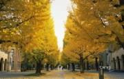 日本风光风景摄影Bing主题宽屏壁纸 壁纸5 日本风光风景摄影Bi 风景壁纸