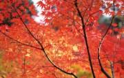 日本京都高清风景壁纸 风景壁纸