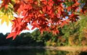 日本六甲山的红叶 风景壁纸
