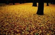 日本随拍之游 风光风景植物宽屏壁纸 壁纸4 日本随拍之游 风光风 风景壁纸