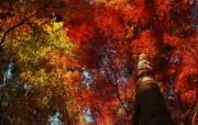 日本随拍之游 风光风景植物宽屏壁纸 壁纸9 日本随拍之游 风光风 风景壁纸
