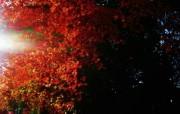 日本随拍之游 风光风景植物宽屏壁纸 壁纸10 日本随拍之游 风光风 风景壁纸