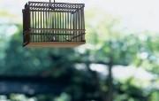 日式静物夏季摄影精美壁纸 风景壁纸