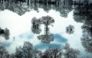 上帝之眼 扬恩 亚瑟 Yann Arthus Bertrand 空中摄影奇景壁纸法国篇 鸟瞰法国 Taponas附近水中生长的树图片壁纸 上帝之眼空中摄影奇景法国篇 风景壁纸