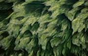 上帝之眼 扬恩 亚瑟 Yann Arthus Bertrand 空中摄影奇景壁纸法国篇 鸟瞰法国 卢瓦尔河中的植物图片壁纸 上帝之眼空中摄影奇景法国篇 风景壁纸