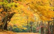 树林风景桌面壁纸下载 树林风景桌面壁纸下载 风景壁纸
