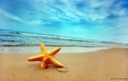 海滩上的海星图片壁纸 The Best of Nature第五集 风景壁纸