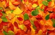 彩色的树叶 秋天彩色的落叶图片壁纸 The Best of Nature第五集 风景壁纸