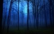 迷雾森林 雾色蒙蒙的树林图片壁纸 The Best of Nature第五集 风景壁纸