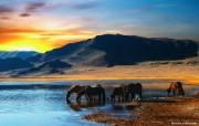 日落景色 如画般的非洲草原图片壁纸 The Best of Nature第五集 风景壁纸