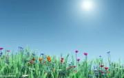 阳光下的野花图片壁纸 The Best of Nature第五集 风景壁纸