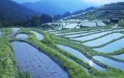 Windows 7世界名胜高清壁纸 亚洲篇 日本 三重县稻田 Rice paddy Mie prefecture Japan Windows 7世界名胜高清壁纸亚洲篇 风景壁纸