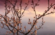Windows 7世界名胜高清壁纸 亚洲篇 日本 富士山与樱花 Mount Fuji and Cherry Blossoms Japan Windows 7世界名胜高清壁纸亚洲篇 风景壁纸