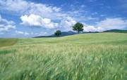 小麦田园风光 风景壁纸