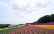 夏日北海道郊外风景 风景壁纸