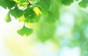 夏日气息清新绿叶高清壁纸 风景壁纸