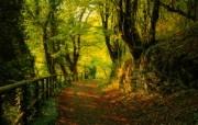 新西兰郊外风景壁纸 新西兰风景 铺满落叶的森林小径图片壁纸 新西兰郊外风景壁纸 风景壁纸